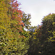 Cranberry_glade_early_foliage