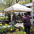 Flower Wholesaler