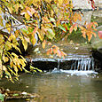 Brooklyn_botanic_garden_5