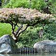 Brooklyn_botanic_garden_16