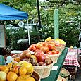 Food Study, Tomatoes