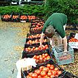 Farmer's Son Displays Tomatoes