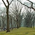 Central Park, Warm Early March 7