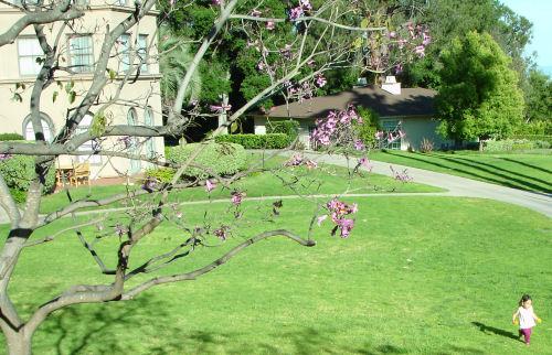 PurpleBlossoms