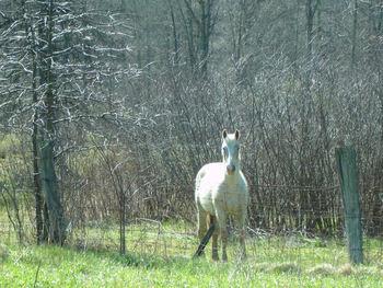 White_horse_on_dawson_road