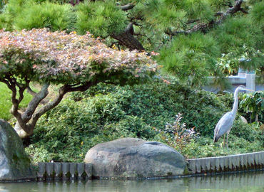 Brooklyn_botanic_garden_15_a