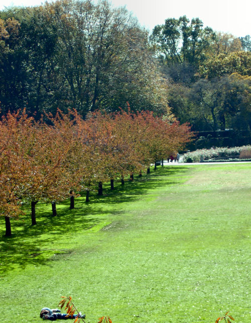 Brooklyn_botanic_garden_1