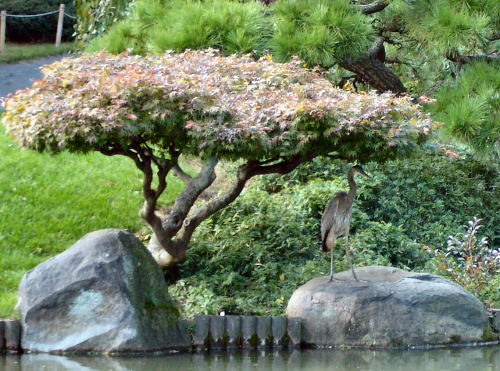 Brooklyn_botanic_garden_16