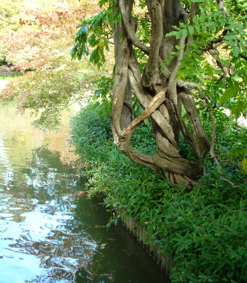 Brooklyn_botanic_garden_2