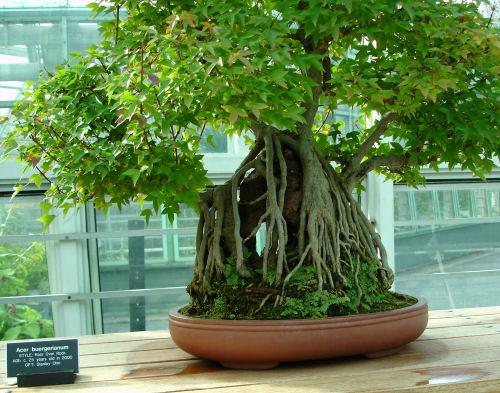 Brooklyn_botanic_garden_9
