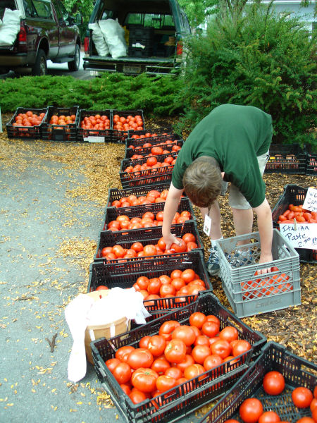 Farmer's Son Displays Tomatoes