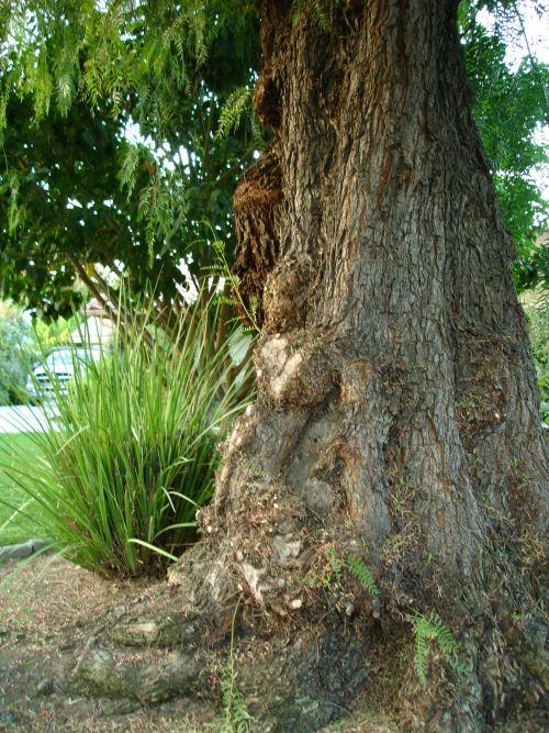 Precarious Rooting