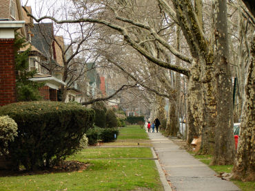 Brooklyn_trees_street_001_1a