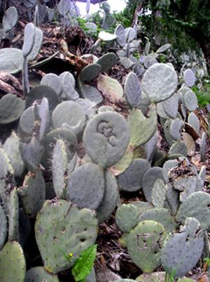 Cactus_lovegraffiti_300w